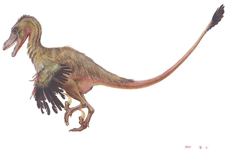 aujourdhui je vais vous parler dun autre dinosaure le vlociraptor